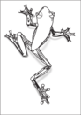 Frog  black and white tree frog cliparts