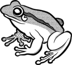 Frog  black and white vector clip art of waiting frog in black and white