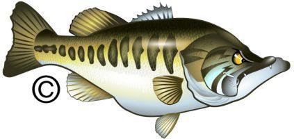Mad bass vector marine wildlife fine art custom design and clipart
