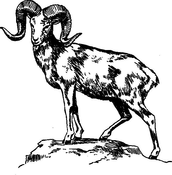 Ram argali clip art at vector clip art