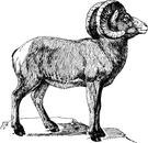 Ram clipart ram clipart fans 4