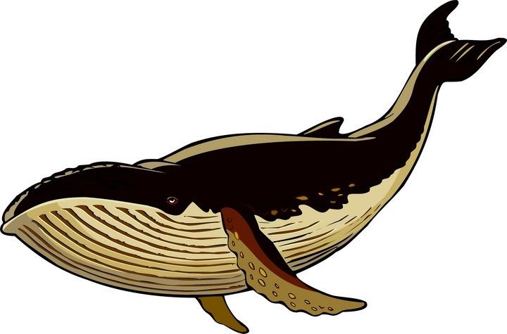 Top whale clip art free clipart image 2