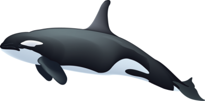 Whale clipart clipartaz free collection