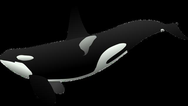 Whale clipart tumblr clipartxtras