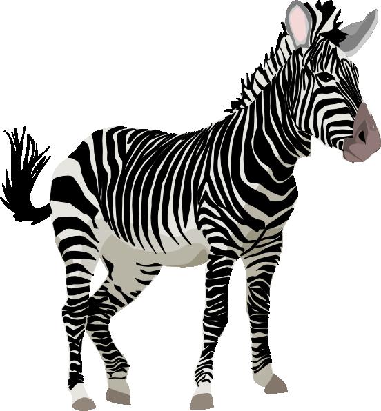 Zebra 3 clip art at vector clip art