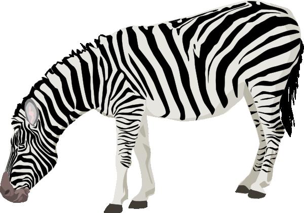 Zebra clip art at vector clip art free