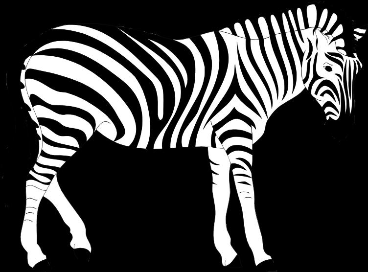 Zebra clipart realistic pencil and in color zebra